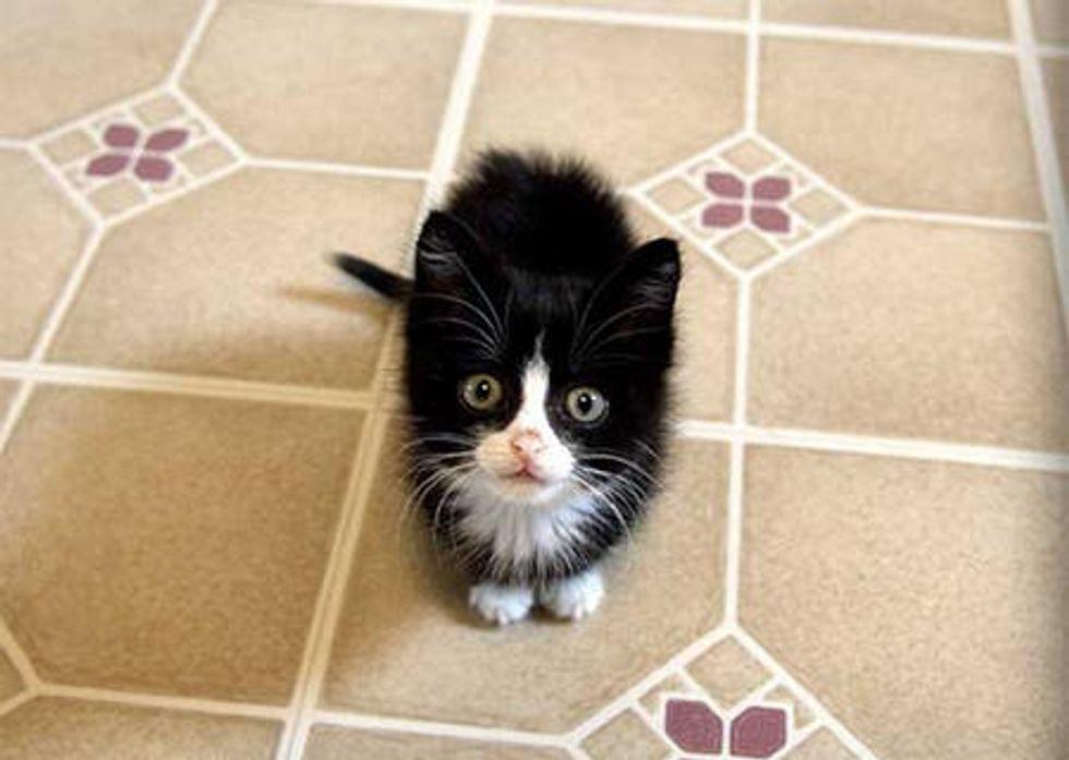 Rescue Tuxedo Kitty's First Thanksgiving