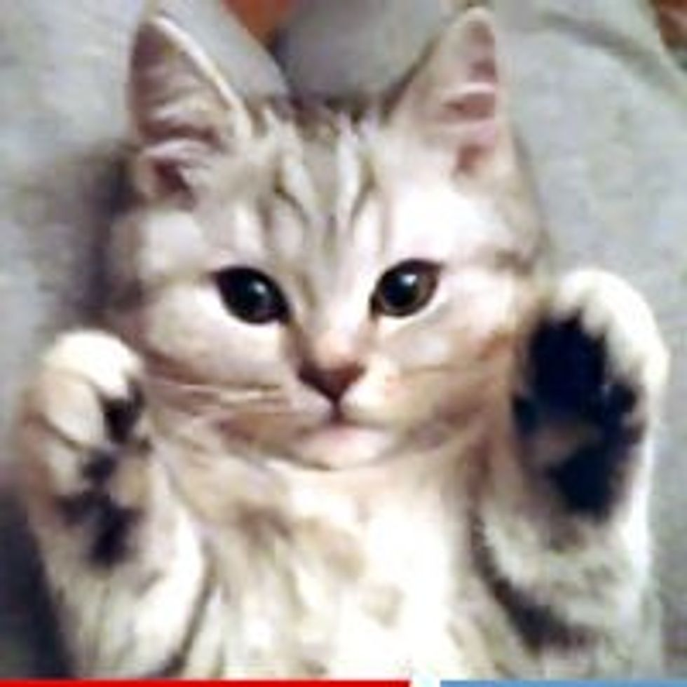 Sweet Lap Kitty