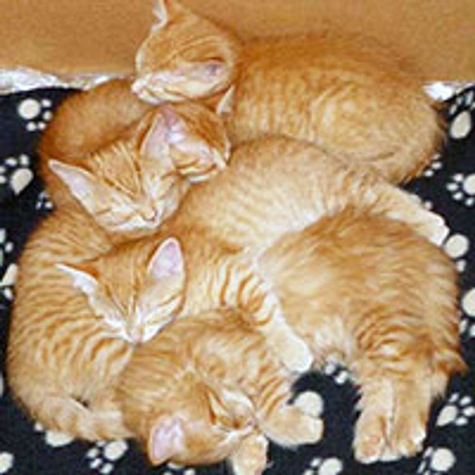 Ginger Family of Seven and Their Journey to Forever Homes