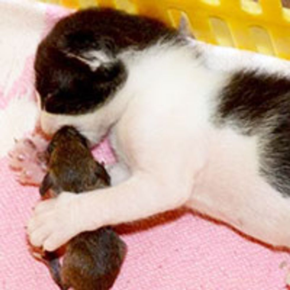 Cat Mama and Her Kitten Adopt Mouse into Their Family