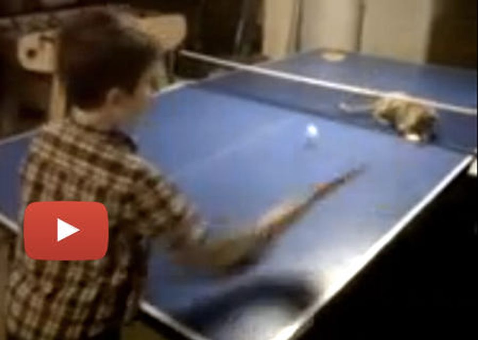 Kitty Plays Ping Pong
