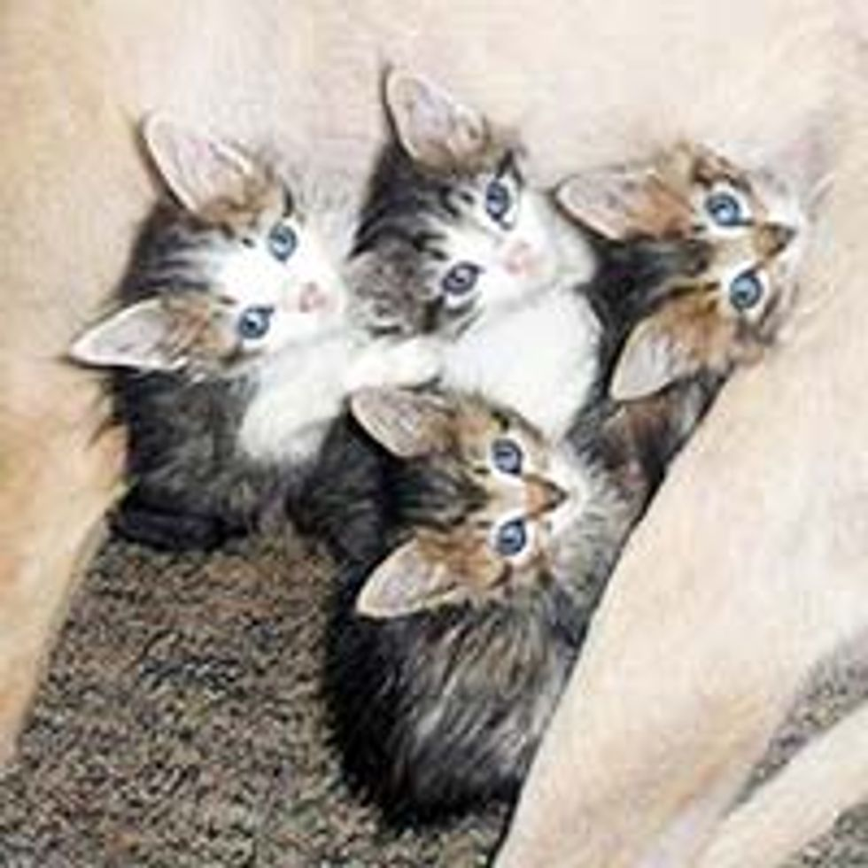 Abandoned Kittens Rescued and Adopted by Once Homeless Dog