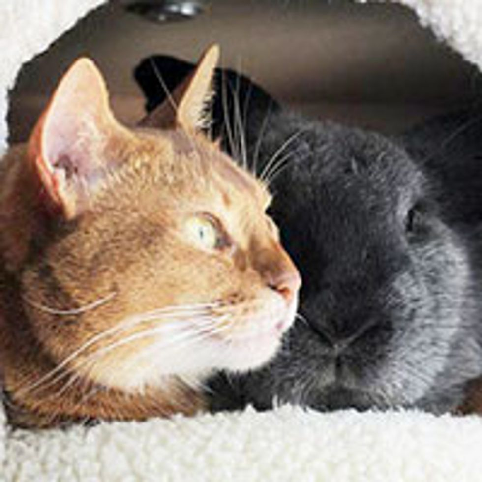 Rescue Cat Finds Everlasting Friendship with Rescue Rabbit