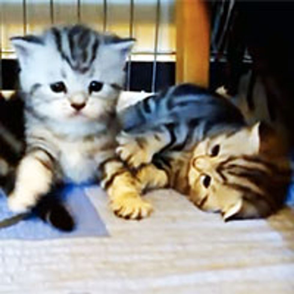 First Steps: Kittens Learn How to Walk