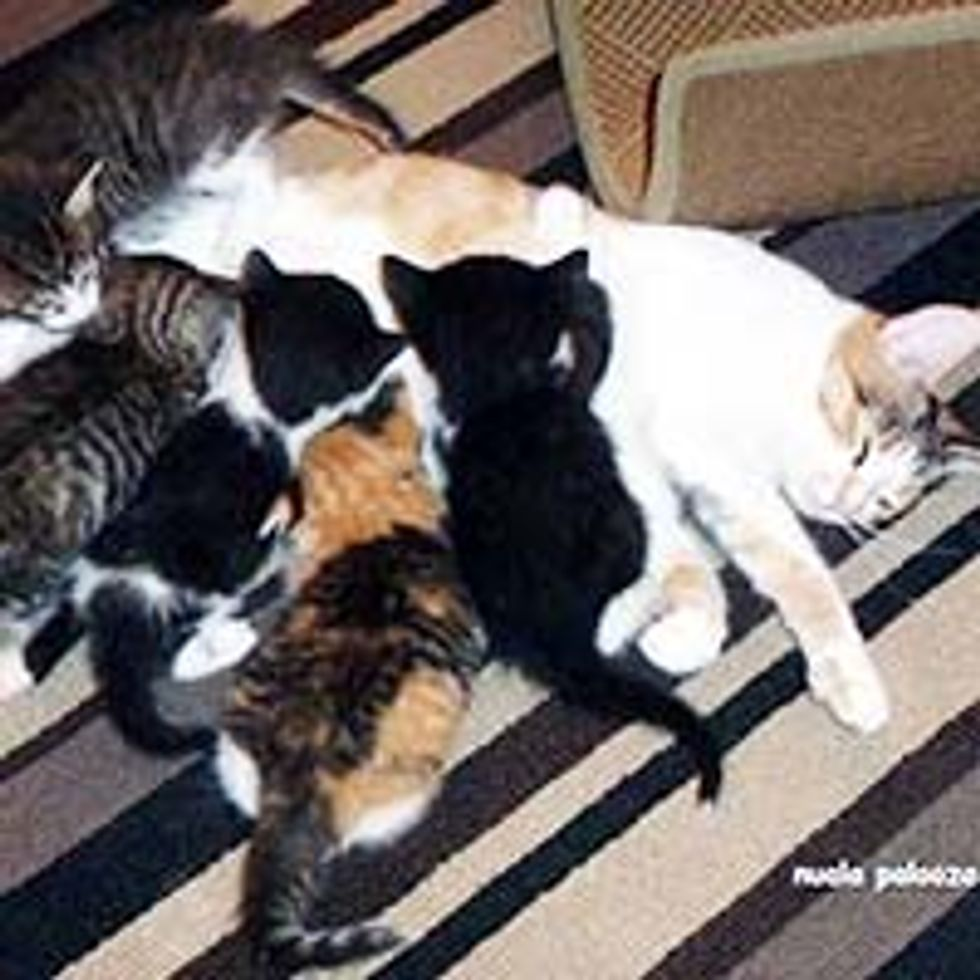 Cat Mama Keeps Her Kittens Alive without Food for 4 Days