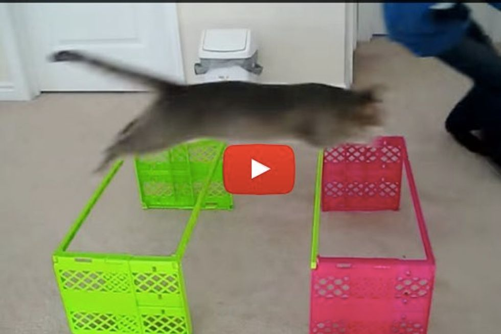 Cats with Superb Agility