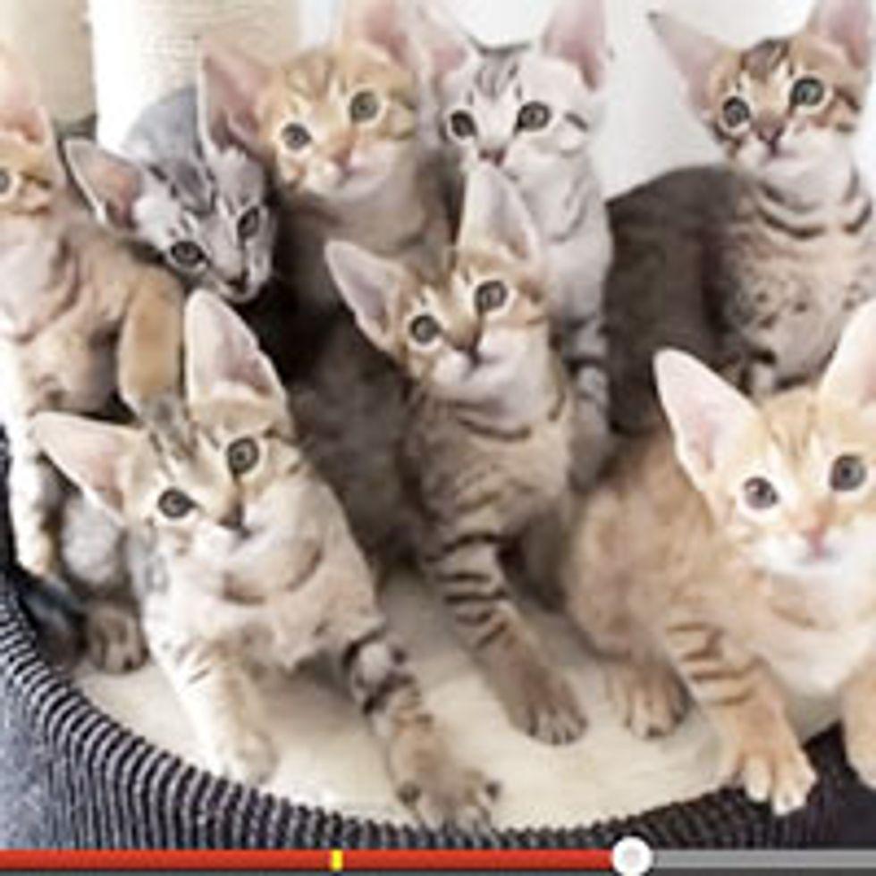 Adorable Synchronized Kittens!