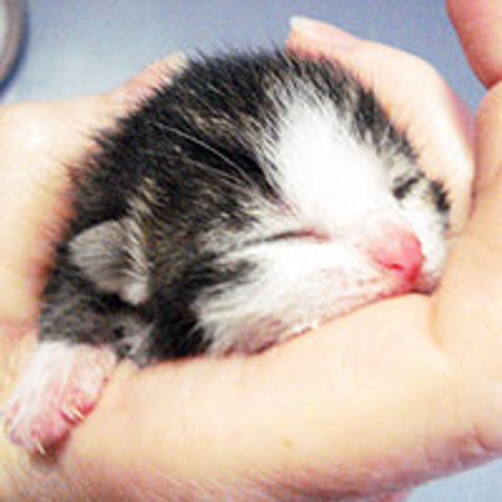 Kitten Rescued at Brooklyn Botanical Garden: From Orphan to Happy Cat