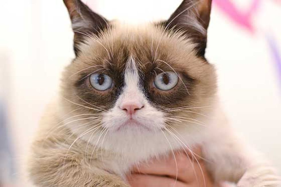 Grumpy Cat Has a Grumpy Monday at Buzzfeed Office