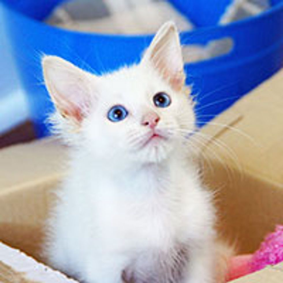A Second Chance Changes Tiny Kitty's Life Forever