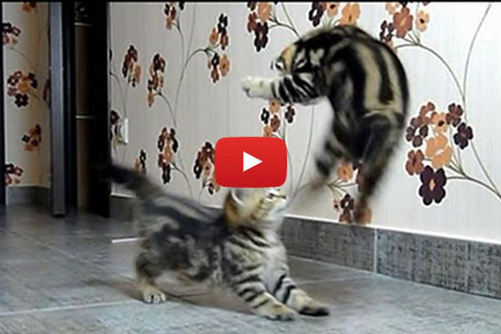 Kittens Fight Dancing
