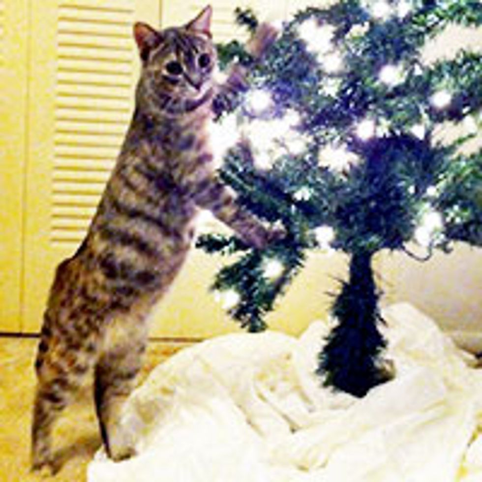 Cat Impressed by Cat-free Anti-gravity Christmas Tree