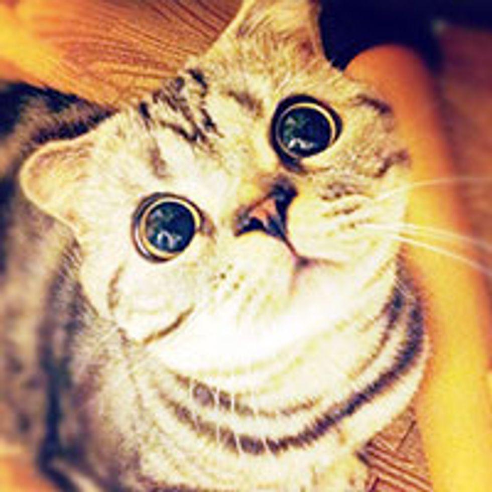 Shishi-Maru the Painfully Cute Kitty, Interweb's Newest Star