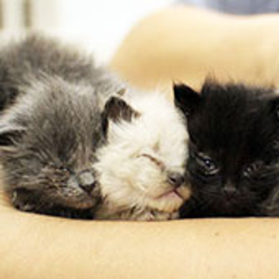 Six Furry Little Souls from Goopy Eyes to Forever Homes