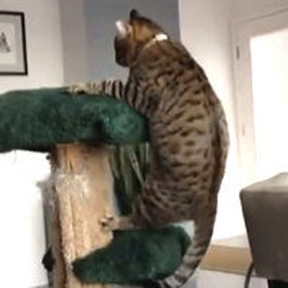 Oskar the Blind Cat and The Cat Tree