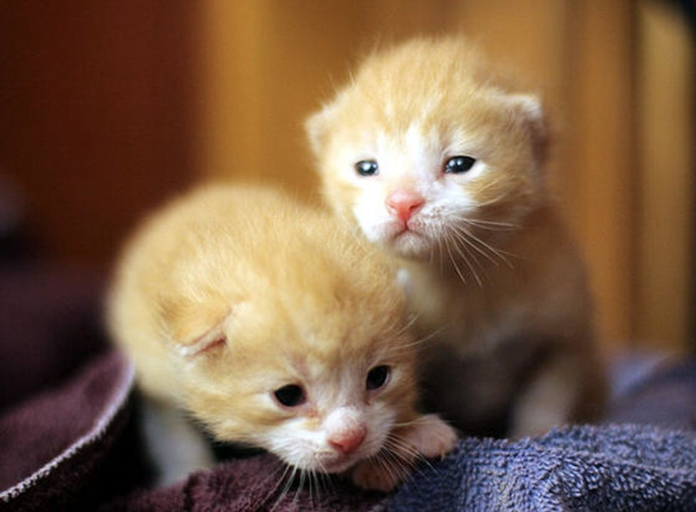 Ginger Brothers Growing Up
