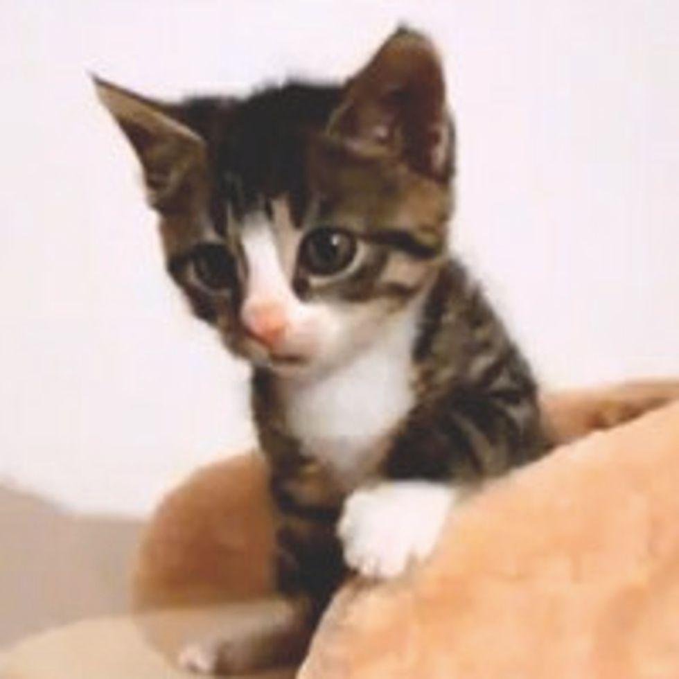 Feisty Kitty in Slow Motion