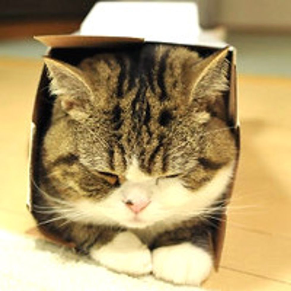 Maru and His New Box