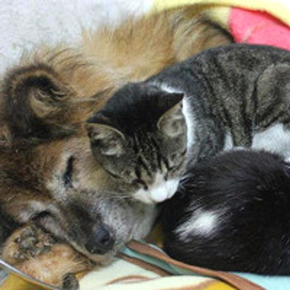 Shelter Cats Keep Rescue Dog Company