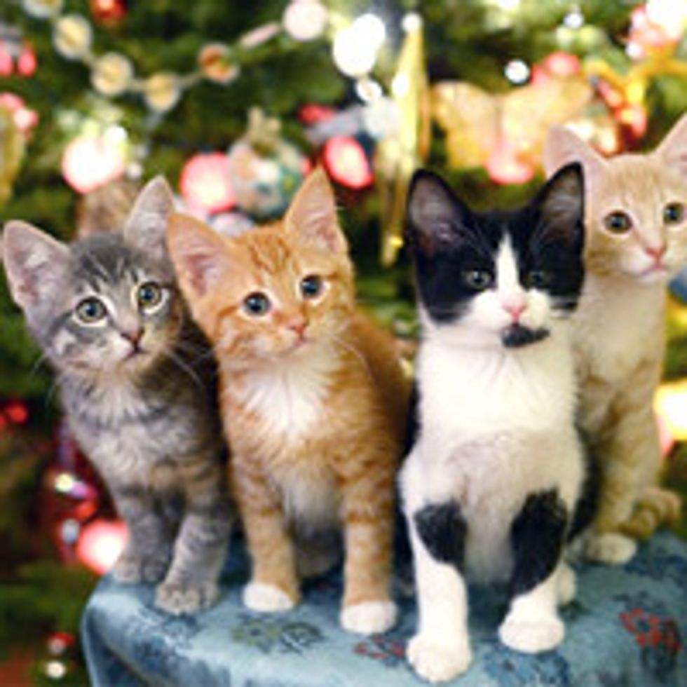 Four Kitties Find Forever Homes For Christmas