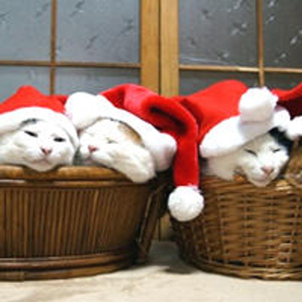 Santa Cat and His Elves
