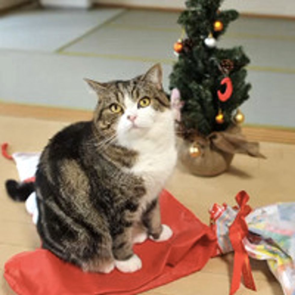 Maru Plays With His Christmas Present