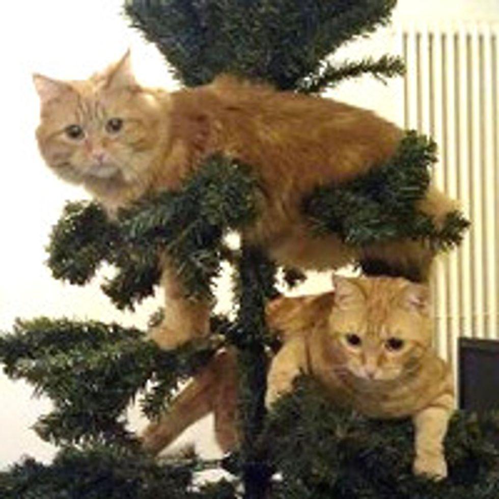 Kitties and Christmas Trees! Merry Christmas!