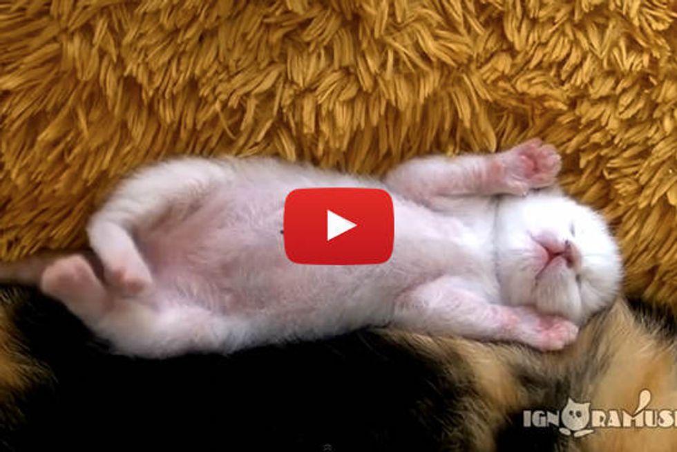 Sweet Dreams Sleepy Kitten