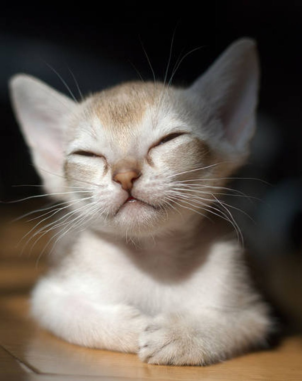 Big-eared Kitty is Pleased