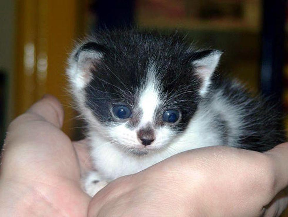 Itty Bitty Kitties Get a Second Chance