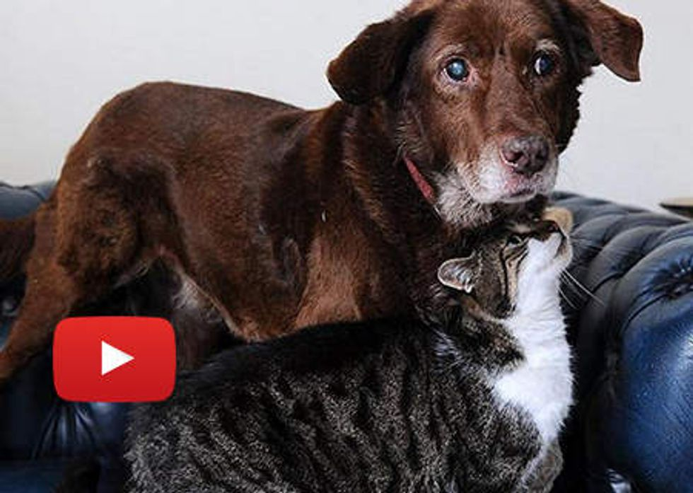 Stray Cat Guides Blind Dog: Best Friends