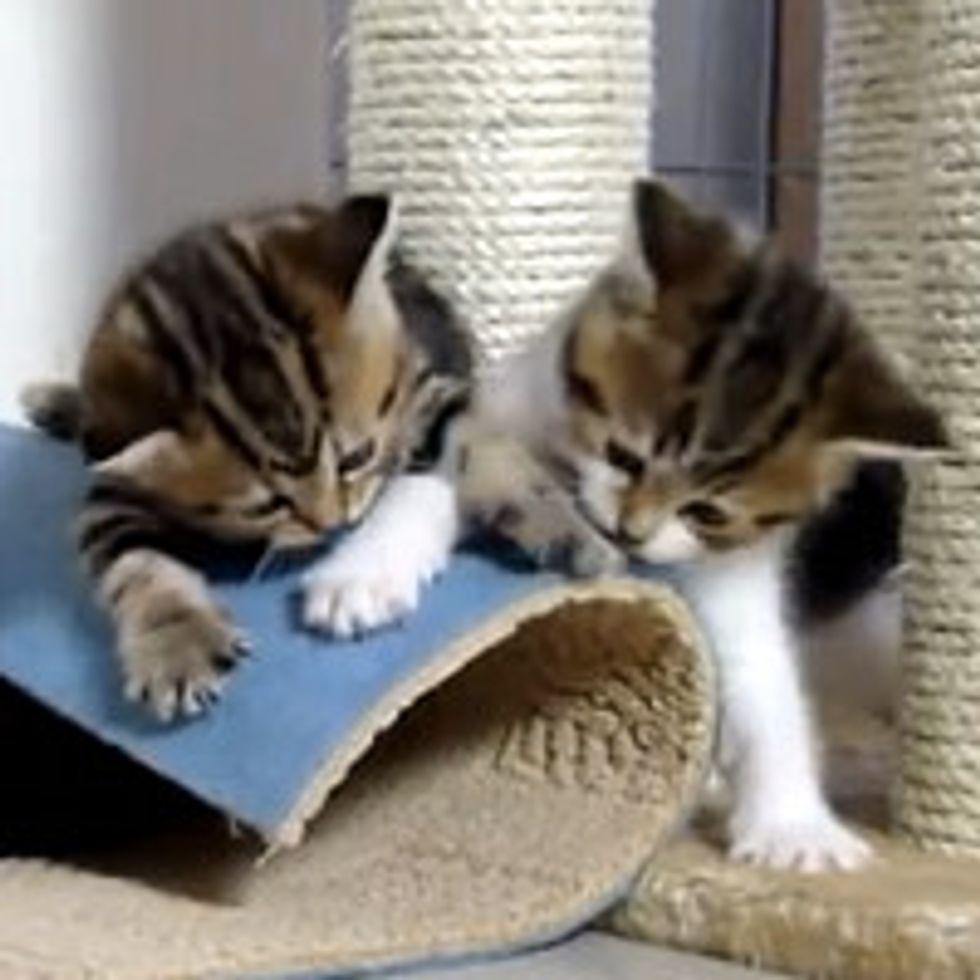 Five Playful Kittens