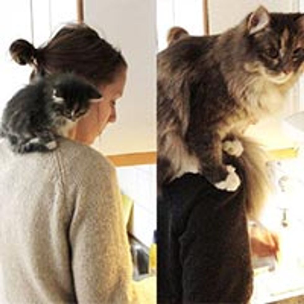 Fluffy Shoulder Cat: Then & Now