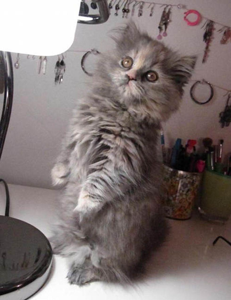 Izzy the Fluffy Feline Supervisor