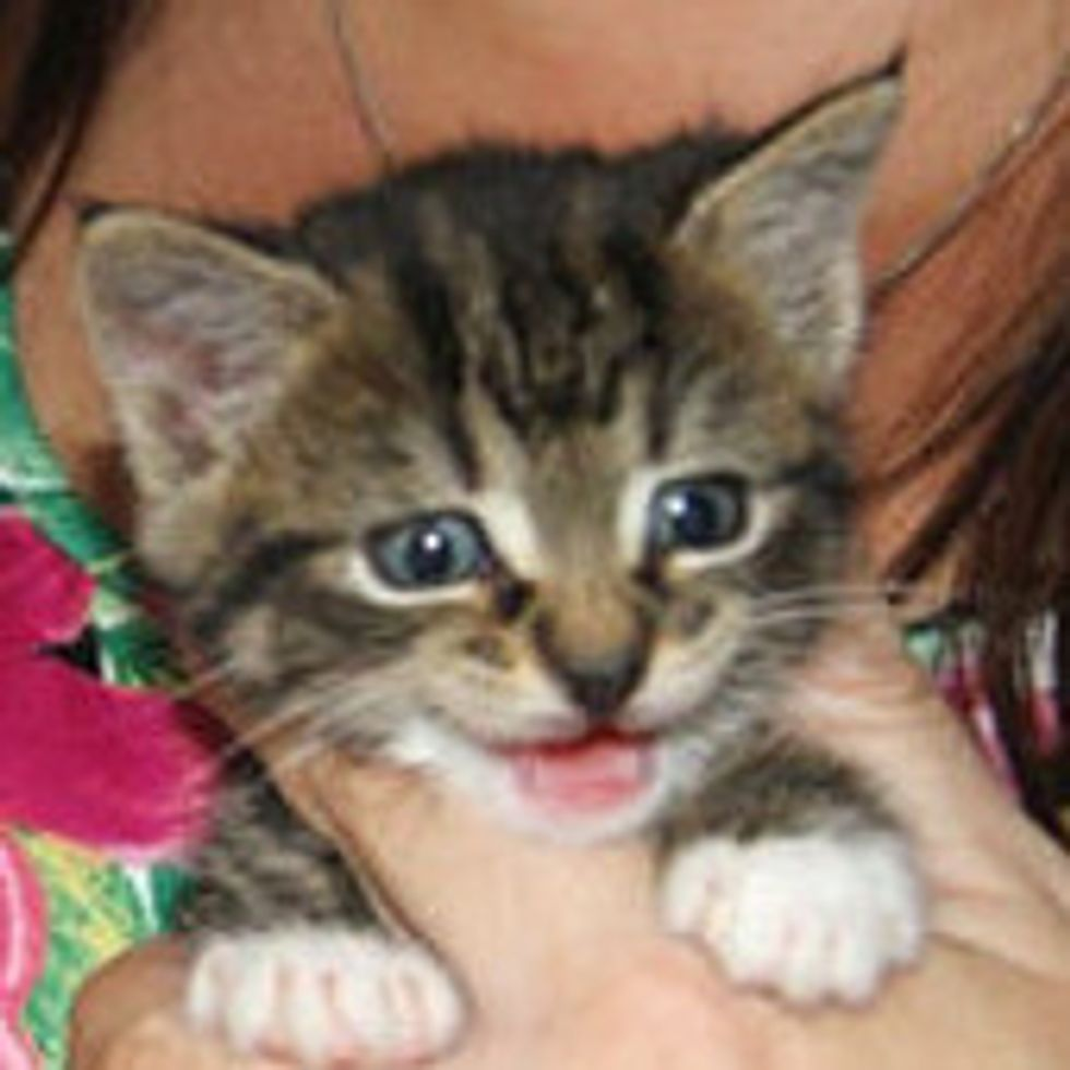 Life Changes for Mika the Orphaned Kitten