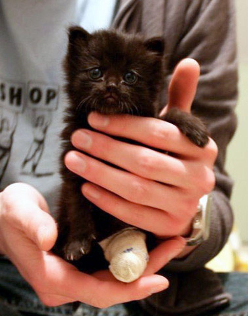 Tiny Tripod Kitty Finds a Second Chance