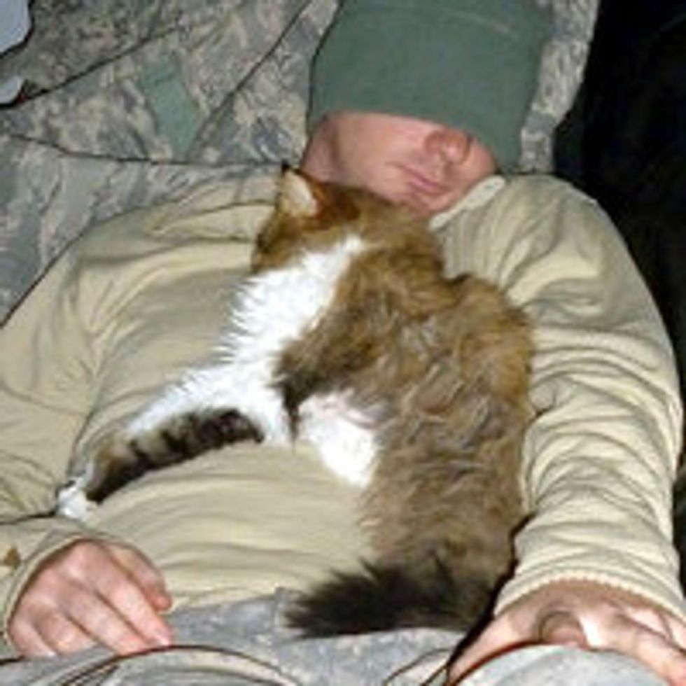 Stray Cat from Middle East Adopted by US Army