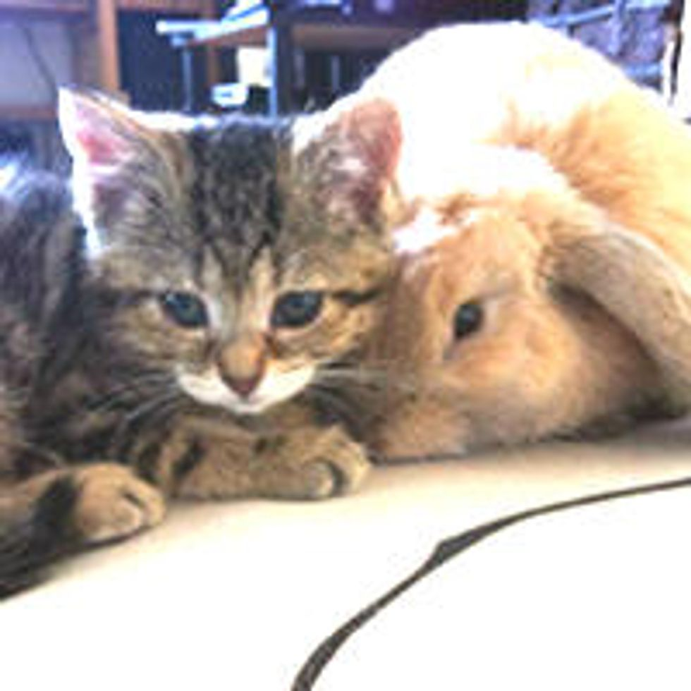 Blind Kitten and Rabbit Find Each Other & Become Best Friends
