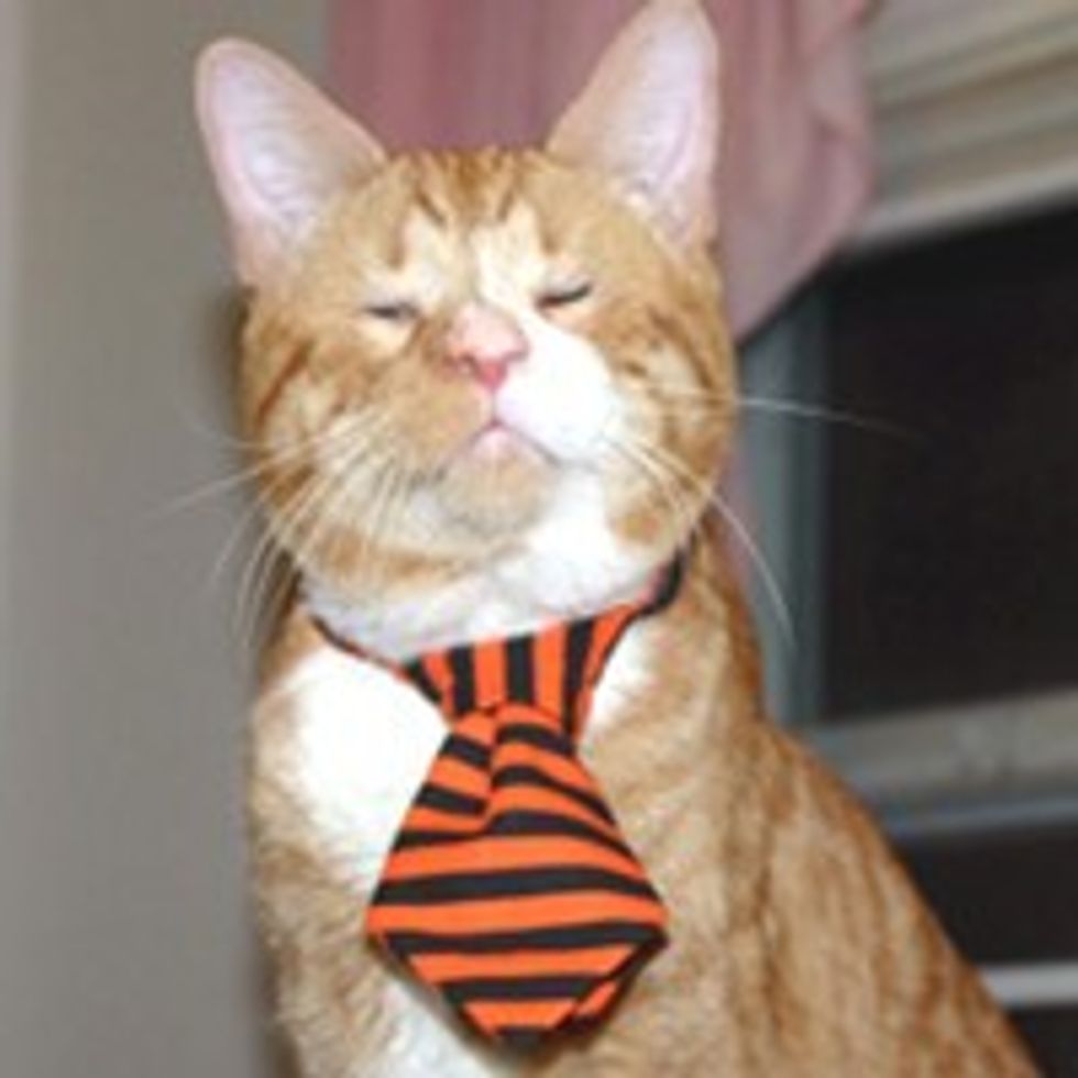 Orange Wonder Cat Lives on Streets Blind, Finds a Place to Call Home