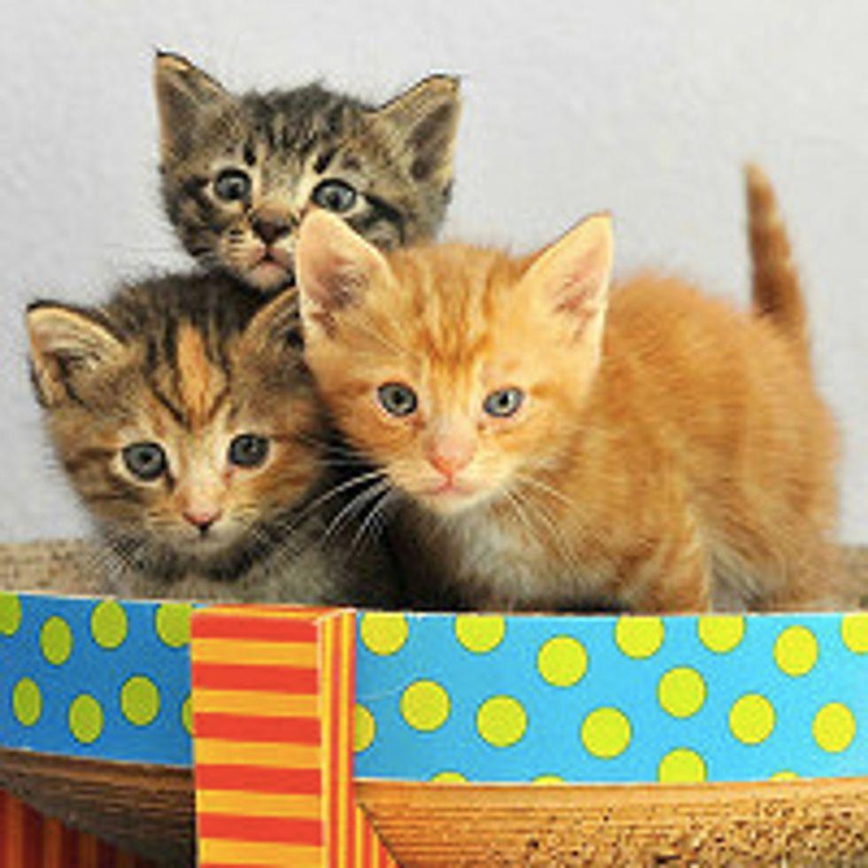 Little Fuzzy Kittens Rescued on Property