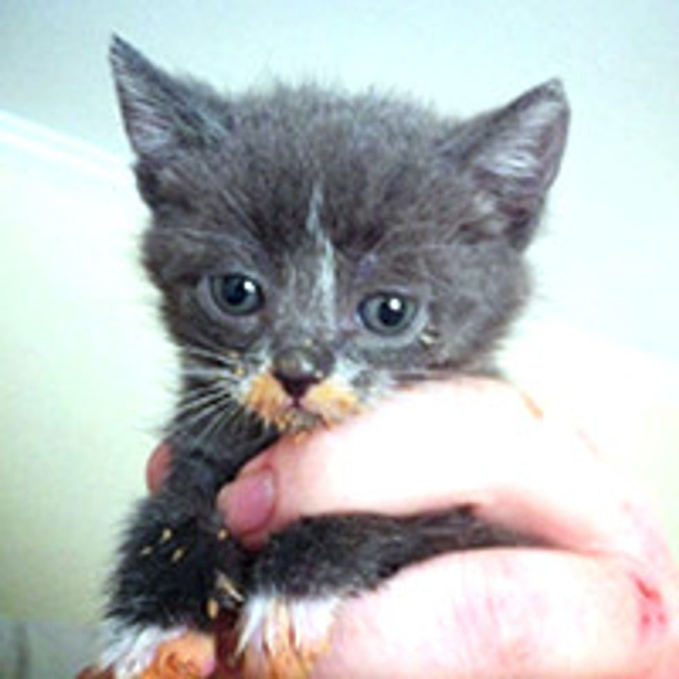 Journey of Three Orphaned Kittens to Happy House Cats