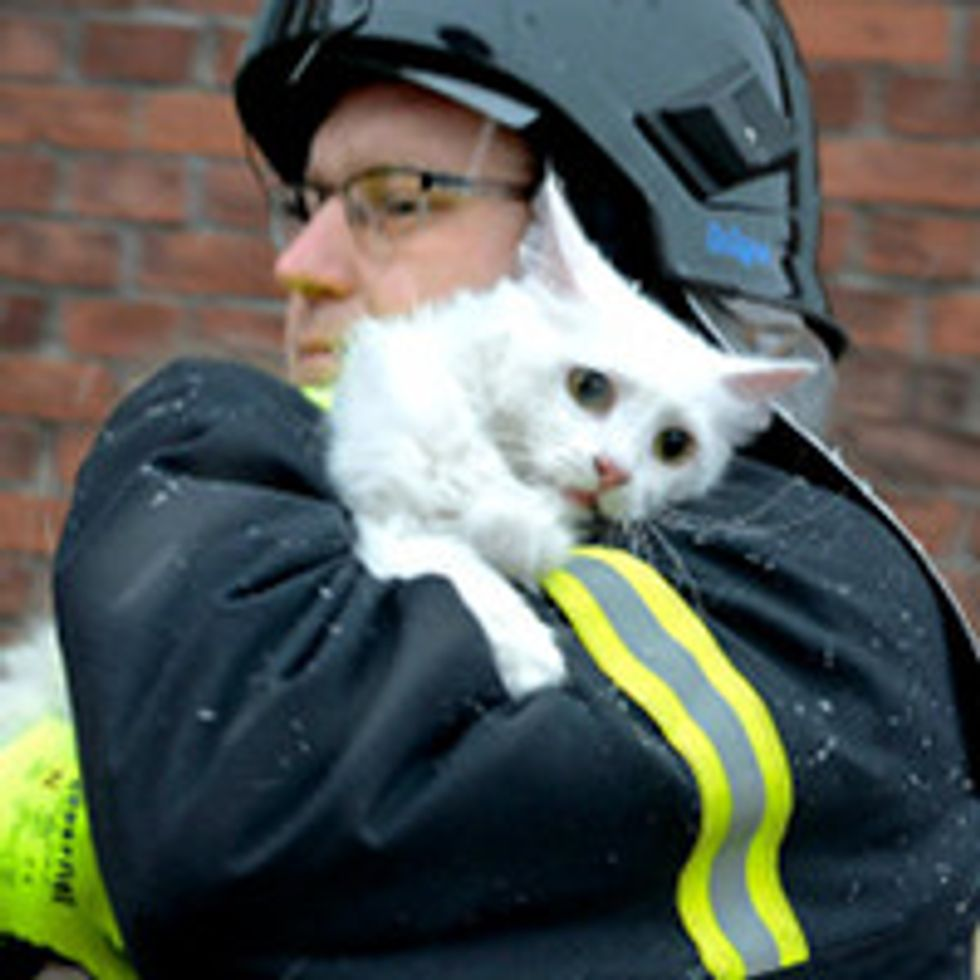 Kitty Saved from Fire, Happy Reunion