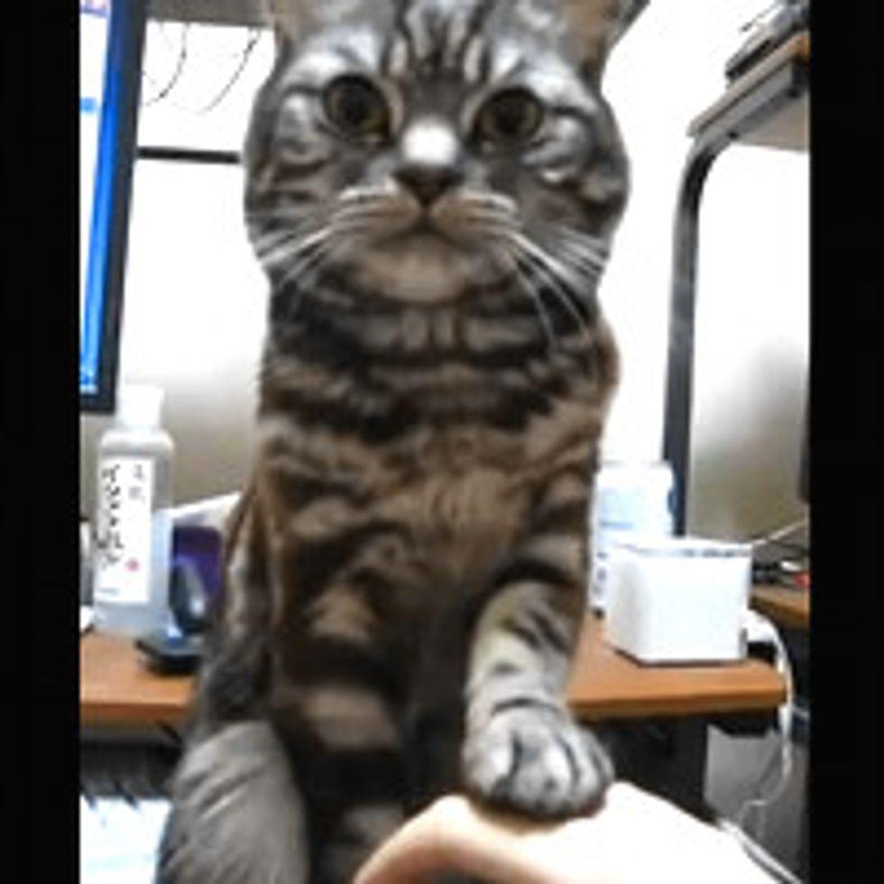 Kitty Refuses Petting