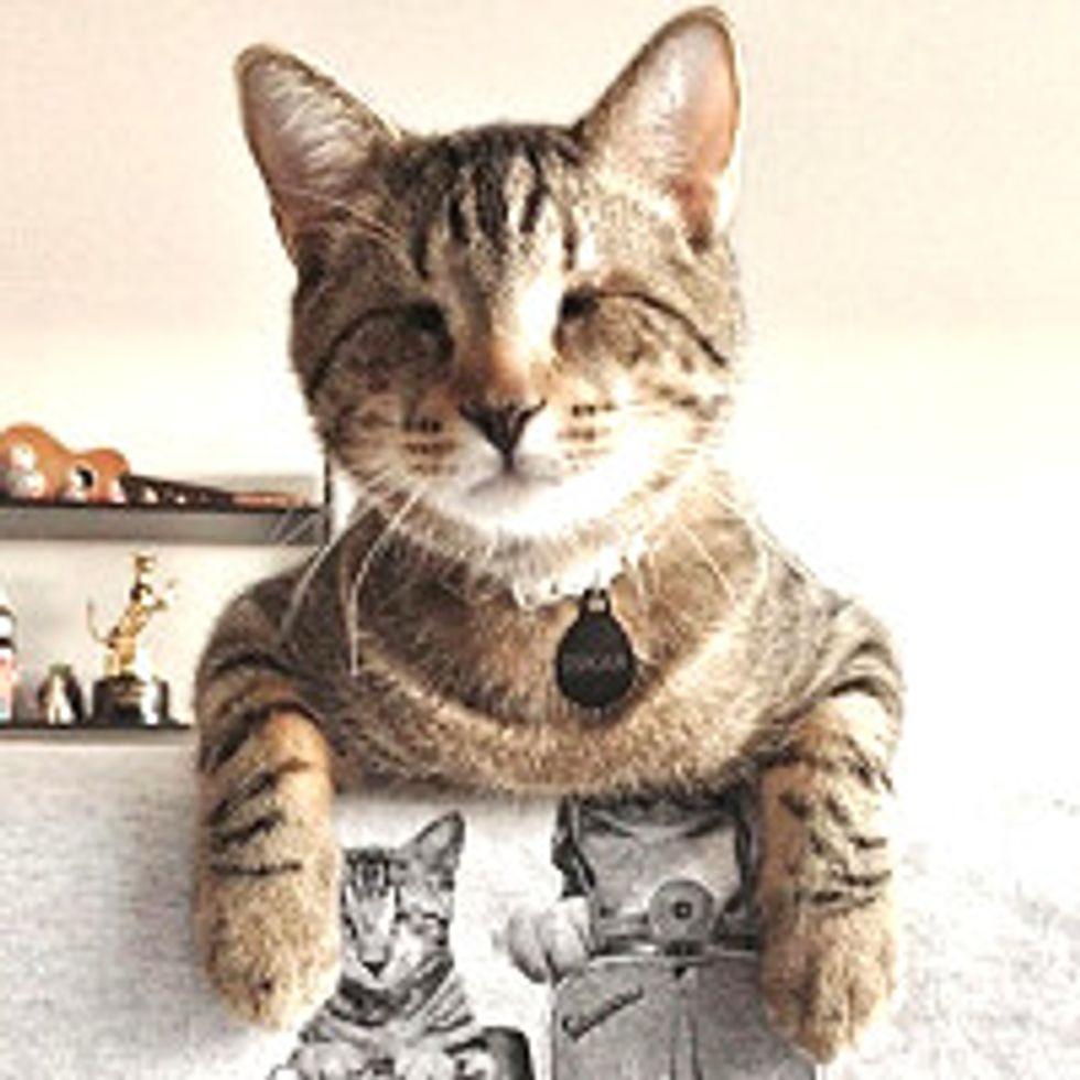 Oskar the Blind Cat Plays Fetch