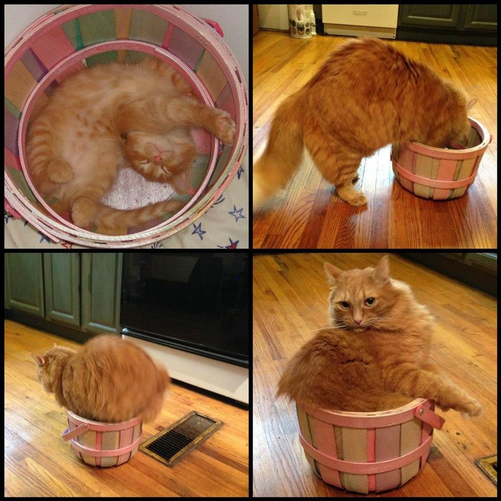 Kitty and His Bucket