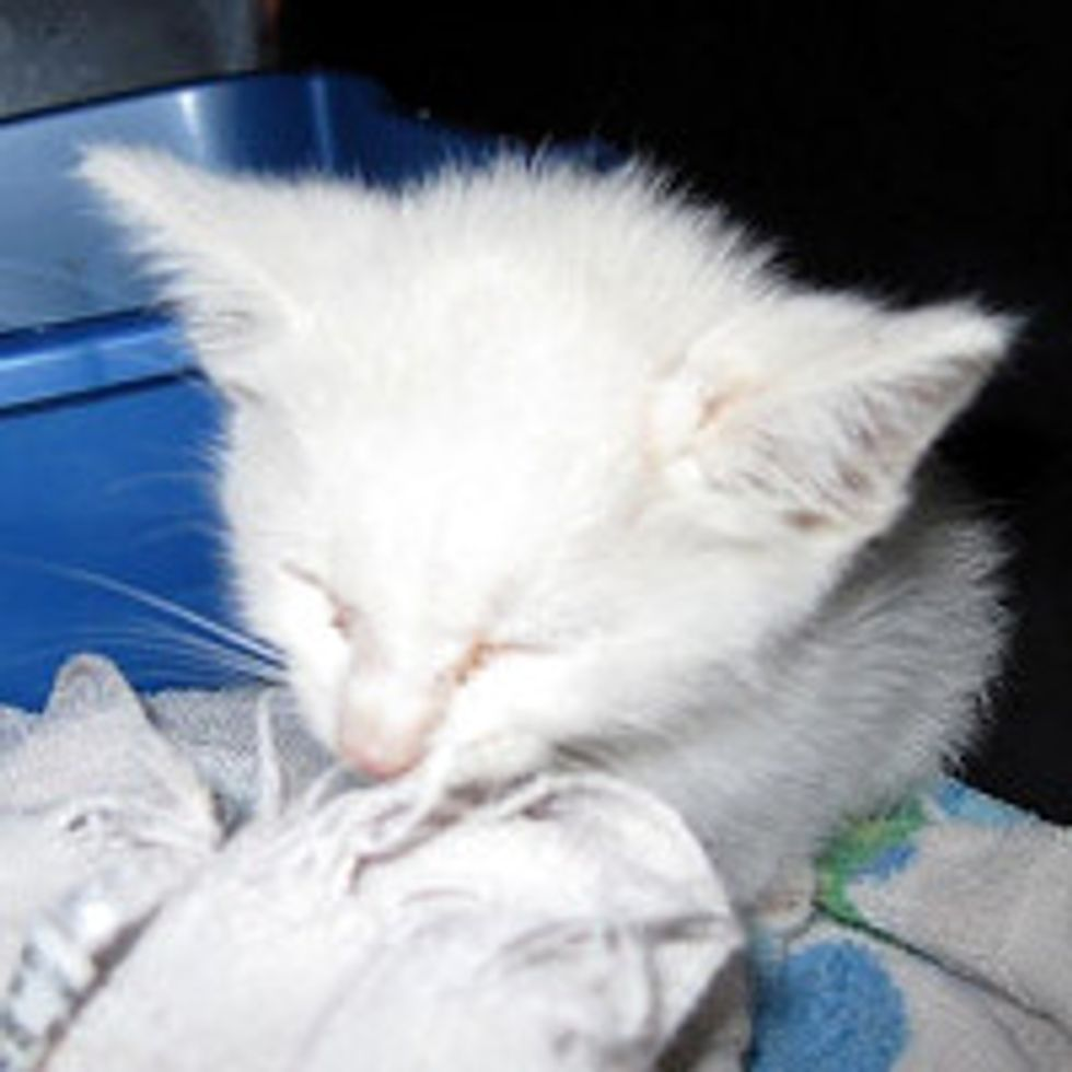 Kitten Saved from the Middle of a Busy Road, Now Thrives