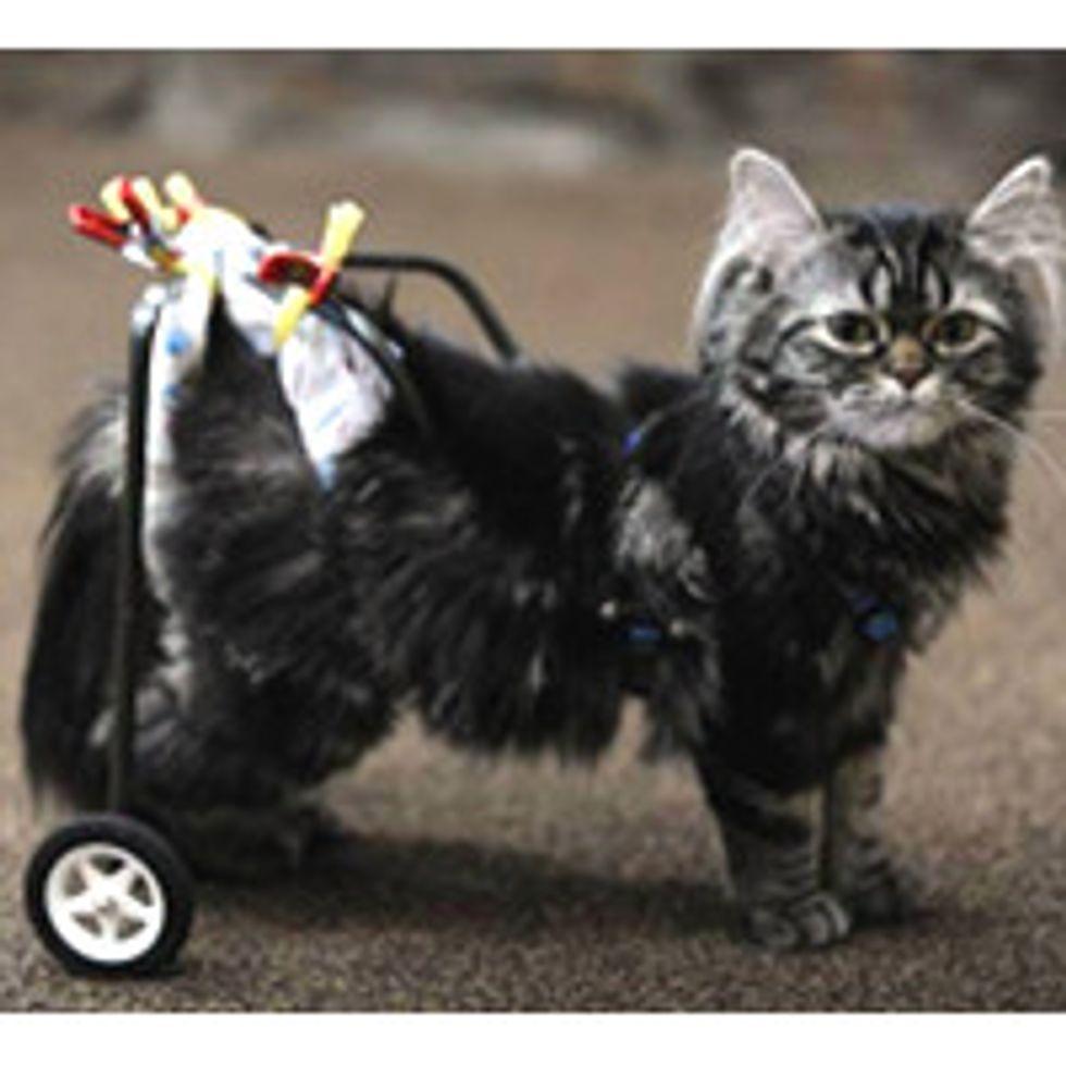 Paralyzed Kitten Gets New Wheels Thanks to High School Robotics Club