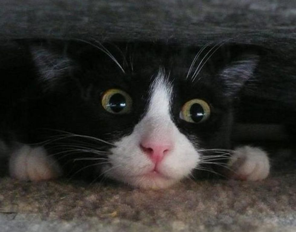 Under the Couch