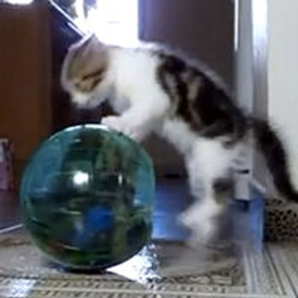 Funny Quirks of Kittens