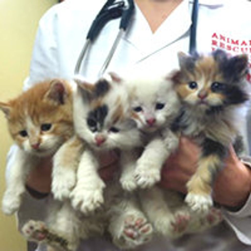 Abandoned Kittens Saved from Freezing Cold in Boston